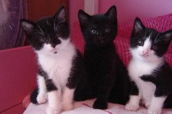 Our kittens Kinder, Chess & Minty